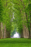 Parkof Versailles. Alley in the Parkof Versailles, France Stock Images