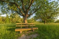 Parkowa ławka pod jabłonią Zdjęcie Stock