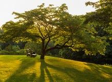 Parkowa ławka pod kwiatonośnym dereniowym drzewem Zdjęcia Royalty Free