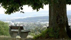 Parkowa ławka pod starym wapna drzewem zbiory