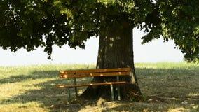 Parkowa ławka pod starym wapna drzewem zdjęcie wideo