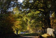 Parkowa ścieżka z drzewami w jesieni, spadku/ Fotografia Stock