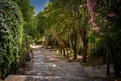 Parkowa aleja w Herceg Novi starym miasteczku zdjęcia royalty free