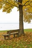 Parkowa ławka i drzewo na jeziornym Chiemsee, Niemcy Fotografia Stock