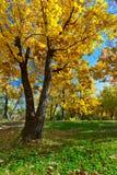 parkowa jesień scena Obrazy Royalty Free