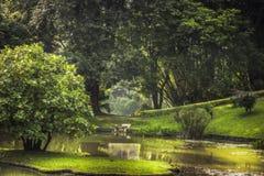 Parkowa ogrodowa sceneria z krajobrazowym projektem w Królewskim Ogrodowym Peradeniya w Sri Lanka Kandy niedalekich otaczaniach fotografia royalty free