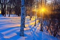 parkowa zima zdjęcia royalty free