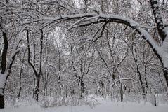 parkowa zima Zdjęcie Royalty Free