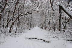 parkowa zima Obraz Stock