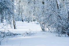 parkowa zima Fotografia Royalty Free