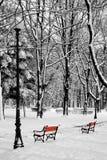 parkowa zima Zdjęcia Stock