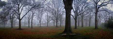 parkowa zima Obrazy Royalty Free