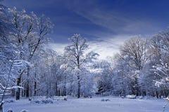 parkowa zima Obraz Royalty Free