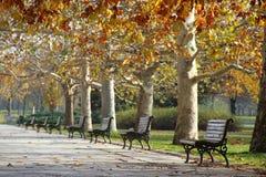 Parkowe ławki Obraz Royalty Free