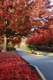 parkowi czerwoni drzewa obraz royalty free