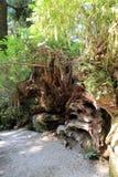 Parkowi drzewa tajemnica Obrazy Stock