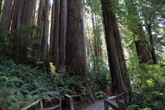 Parkowi drzewa tajemnica Zdjęcie Royalty Free