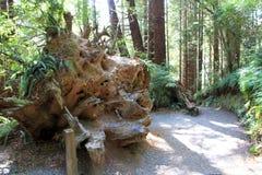 Parkowi drzewa tajemnica Obrazy Royalty Free
