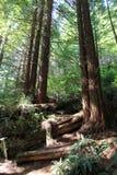 Parkowi drzewa tajemnica Zdjęcie Stock