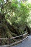 Parkowi drzewa tajemnica Fotografia Stock