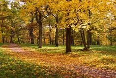 parkowi jesień drzewa Obrazy Royalty Free