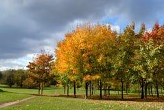 parkowi jesień drzewa obraz royalty free
