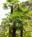 parkowi palm drzewa Podzwrotnikowy klimat fotografia stock