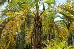 parkowi palm drzewa Podzwrotnikowy klimat zdjęcia royalty free