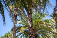 parkowi palm drzewa Podzwrotnikowy klimat obraz stock