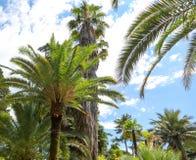 parkowi palm drzewa Podzwrotnikowy klimat zdjęcie stock