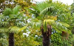 parkowi palm drzewa Podzwrotnikowy klimat fotografia royalty free