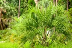 parkowi palm drzewa Podzwrotnikowy klimat zdjęcia stock