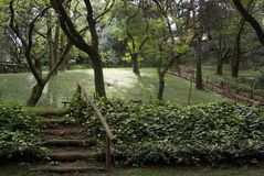 parkowi sceniczni drzewa Obrazy Stock