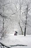 parkowy śnieżny Obrazy Stock