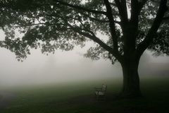 parkowy ławki drzewo zdjęcia stock