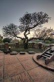 parkowy Azjata drzewo Zdjęcie Stock
