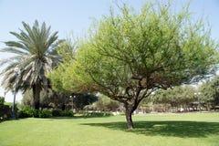 parkowy Dubai piękny widok uae al araba plaży emiratów mamzar panoramiczny park jednoczył widok obrazy royalty free