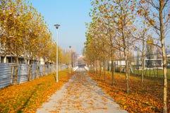 Parkowy footpath Zdjęcia Stock