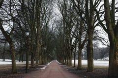 Parkowy footpath w zimie z nieżywymi drzewami, tajemnica straszny ranek w zimie Zdjęcia Royalty Free