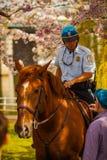Parkowy funkcjonariusz policji przy Jefferson pomnikiem Zdjęcia Royalty Free