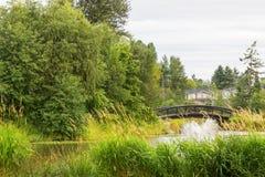 Parkowy jezioro z fontanną Zdjęcia Royalty Free