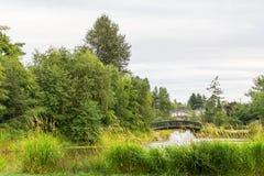 Parkowy jezioro z fontanną Obraz Stock