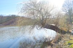 Parkowy jezioro z pi?knymi odbiciami przy wiosna czasem fotografia stock