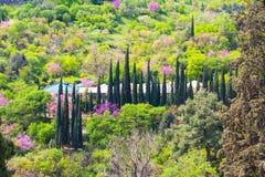 Parkowy krajobraz z cyprysem w Krajowym ogródzie botanicznym Gruzja w Tbilisi Fotografia Royalty Free