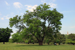 parkowy maymont drzewo Fotografia Royalty Free