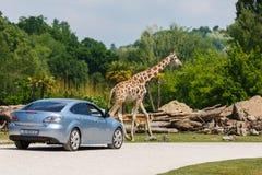 Parkowy Natura Viva, Włochy Zdjęcie Royalty Free