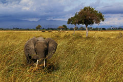 Parkowy Naturalny i Nacional w Mikumi, Tanzania krajobrazy Piękny Afryka w afryce Zdjęcie Stock