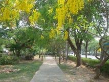 Parkowy ogród relaksuje miasto Obrazy Royalty Free