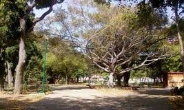 Parkowy parque bonito ambiente paisaje zdjęcia royalty free