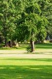 parkowy romantyczny Zdjęcia Royalty Free